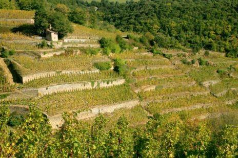 Cornas terraces